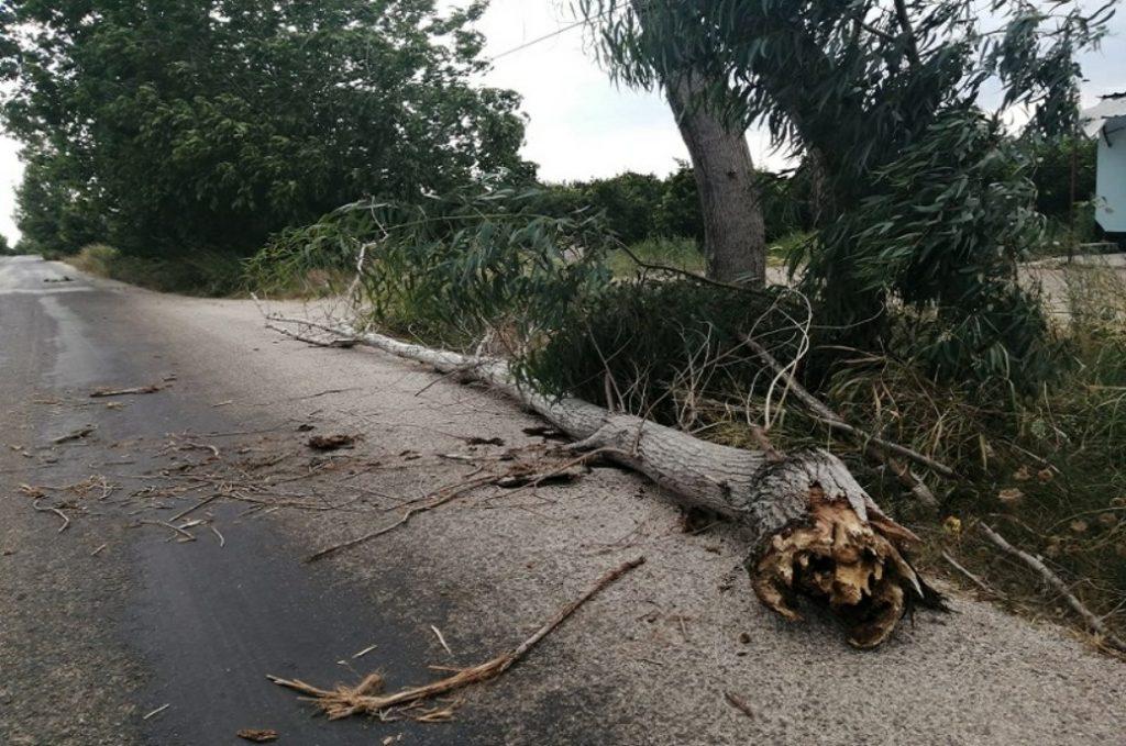 Kozan'da etkili olan rüzgar ağaçları devirdi