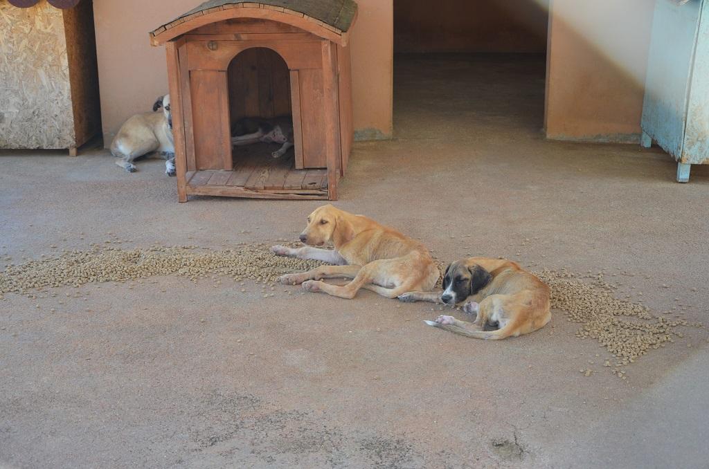 Kozan'da sokak hayvanlarına özel ilgi